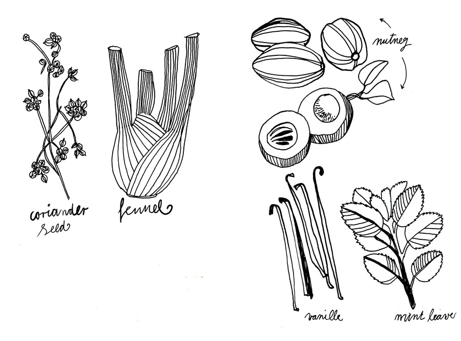 fragrance-drawings-herbal-2